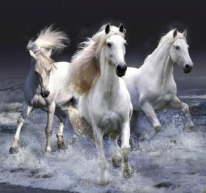 white-horse-wallpaper