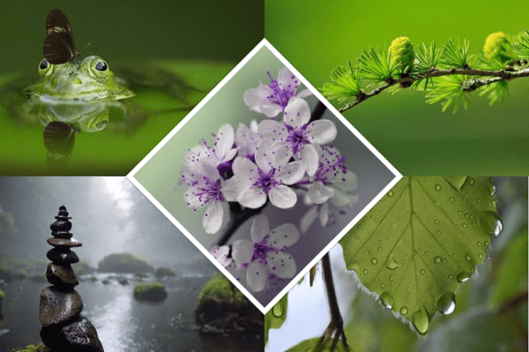 nature photography frog and stones and scenery and flowers