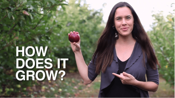 How do apples grow