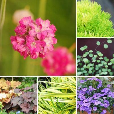 meilleures plantes vivaces couvre sol