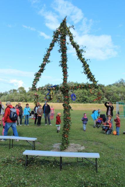 Aufgestellter Mittsommerbaum auf Hiddensee