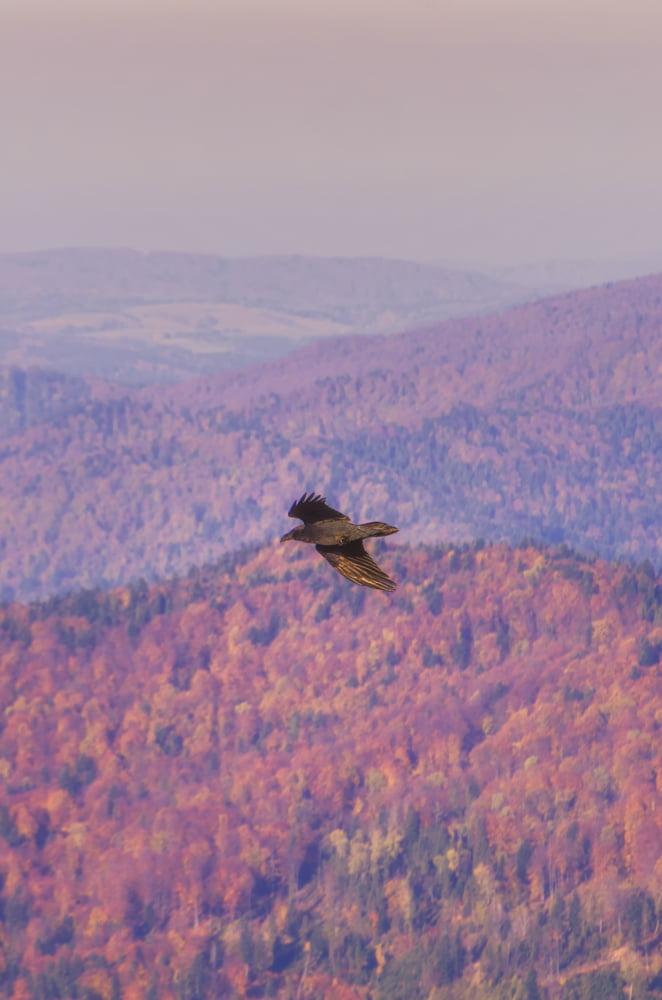 bednarz marek interfoto fotografia krajobrazowa pejzaż zgóry lasy górskie ptak drapieżnik