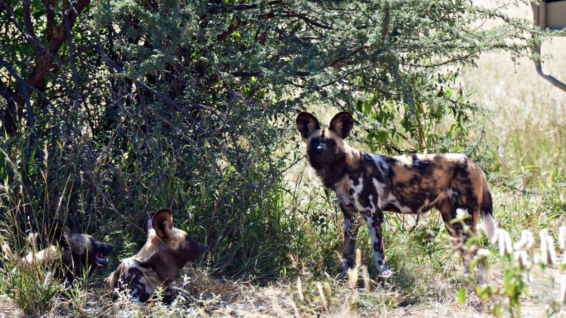 make achange, afryka, interfoto.eu, warszawa, Namibia