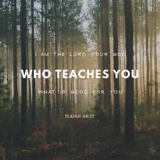 Isaiah 48:17 overlaid on a forest.
