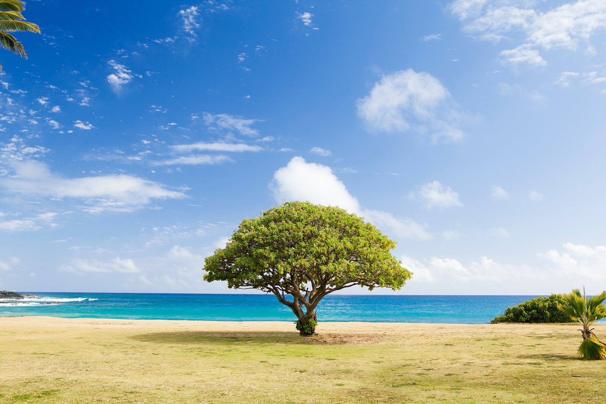 His Encouragement for Your Thursday: Like a tree planted by the water