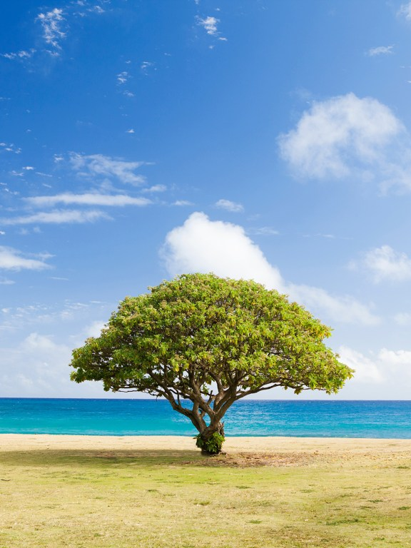 His Encouragement: Like a tree planted by water