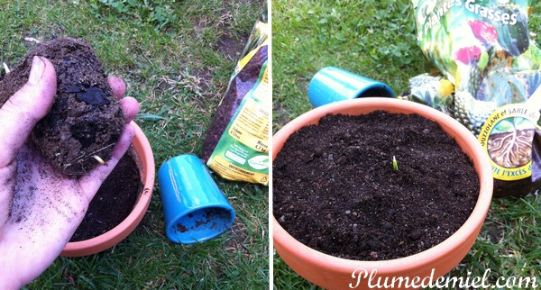 planter-noyau-de-datte-