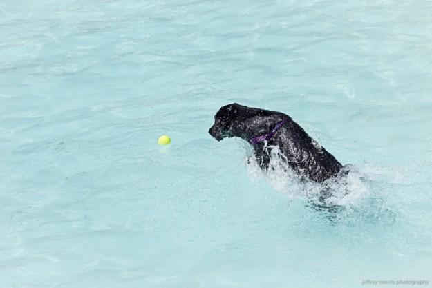 Dog Swim 6