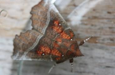 De eerste vlinder is ontpopt. Maar niet wat we verwacht hadden.