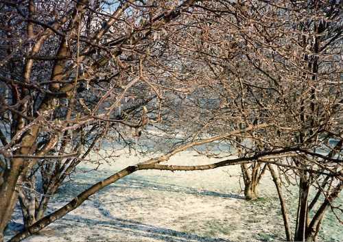collett-park-tree.jpg