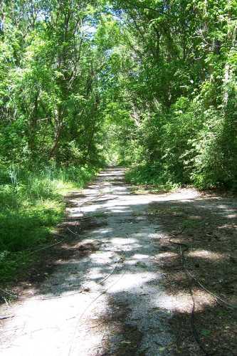 Overgrown abandoned SR 37