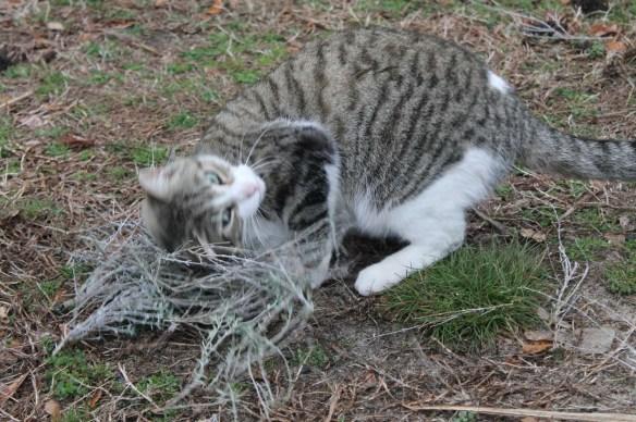 Jasper and Kitty Crack1