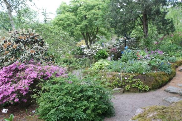 Rock Garden Asian Section at Goteborg BG2