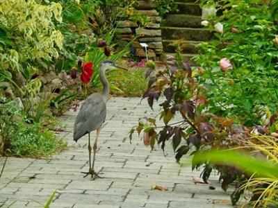 Heronswood: East Coast Edition Sunken Garden at JLBG July 2014