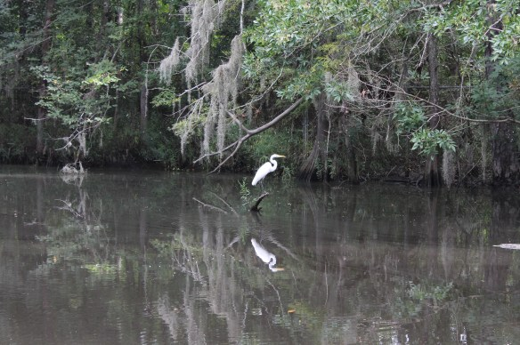 Shangrila Gardens with Egret in Bayou