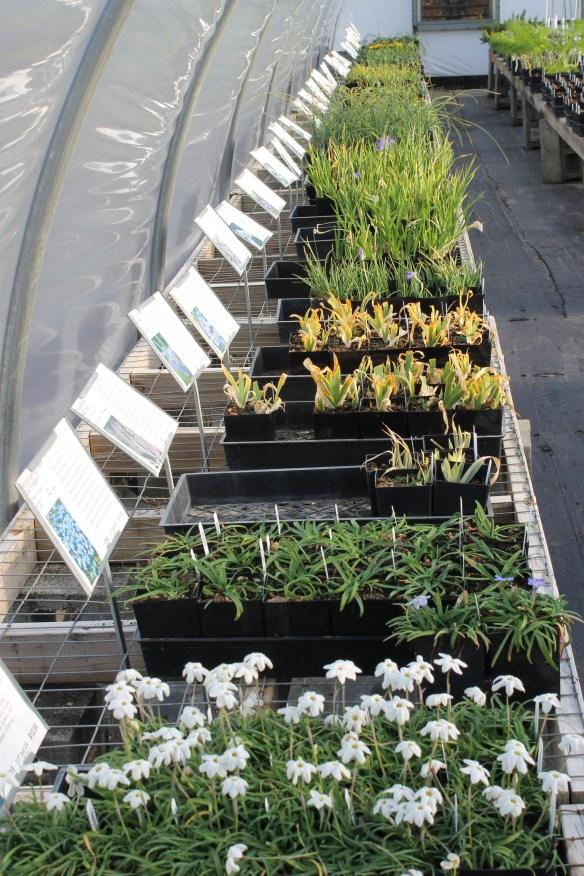Greenhouse 10 flats