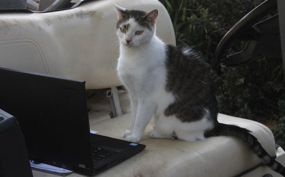 Henry using laptop