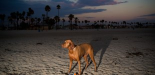 Long Beach Dog Park