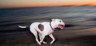 Rosie's Dog Beach, Long Beach, CA