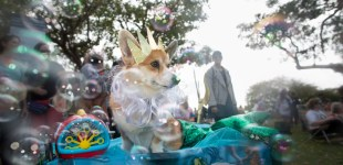 Howl'oween Dog Parade, Long Beach, CA