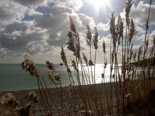 dorset-sea-and-skies