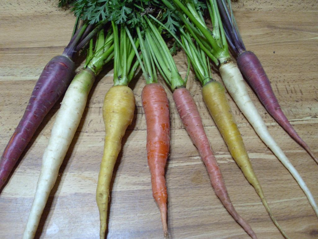 Colorful Carrots John S Random Thoughts And Discussions