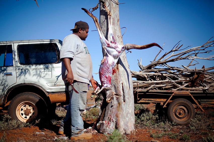 kangaroo skinning hunting aboriginal
