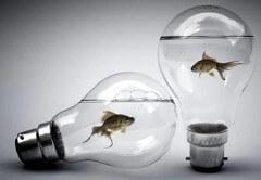 akvárium villanylámpa
