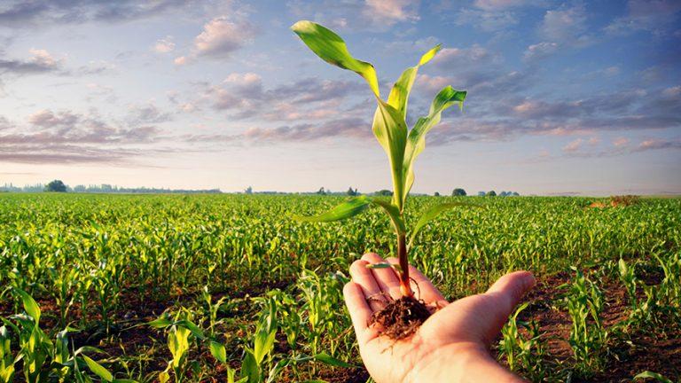 A marcha dos inconsequentes segue firme em torno do agronegócio