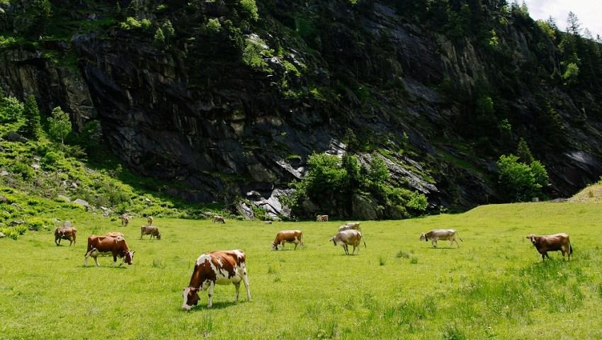 Novidades nas regras do crédito agrícola