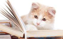 gato-lendo-livro-inteligente