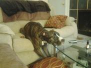 14780452-cao-cachorro-pet-na-pan-cachorros-facebook[1]