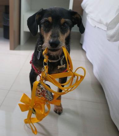 2117607839-cao-cachorro-pet-na-pan-cachorros-facebook