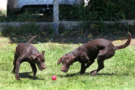 2473259078-cachorro-cao-cao-de-policia-govrj