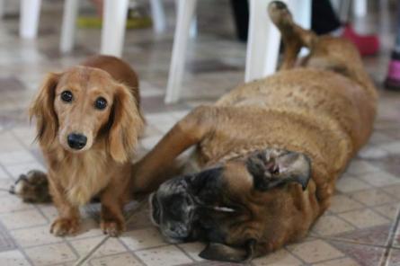 2630071232-cao-cachorro-pet-na-pan-cachorros-facebook