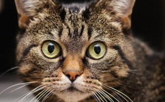 gato-face-rosto-cara-close