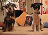 3102624675-cao-cachorro-pet-na-pan-cachorros-facebook