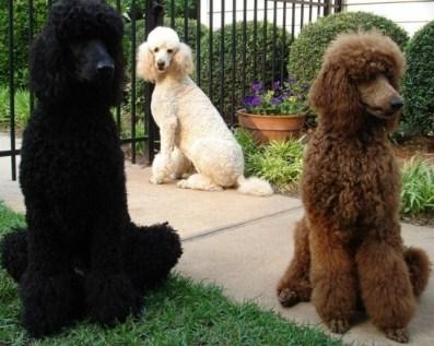 110393014-cao-cachorro-pet-na-pan-cachorros-reproducao