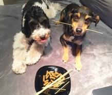 520782026-cao-cachorro-pet-na-pan-cachorros-facebook