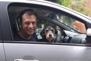 616969549-cao-cachorro-pet-na-pan-cachorros-facebook