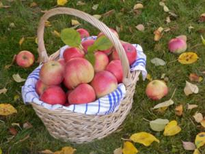 JS Realty Labor Day Apple Basket