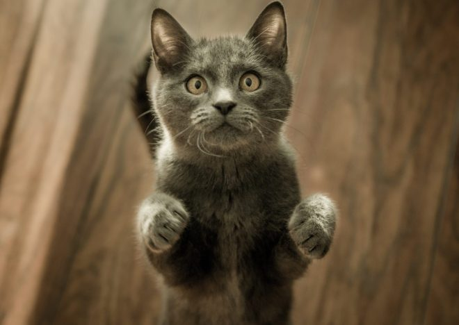 Hangi Kedi Vitamin Takviyesi Gereklidir