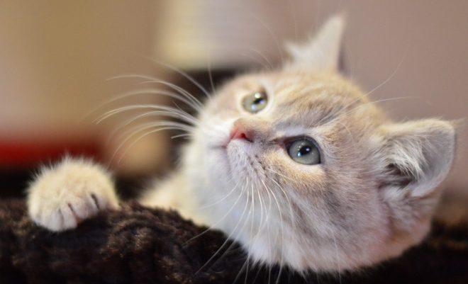 Kedi Çimi Nedir