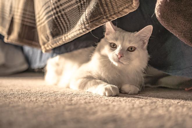 Kedimi Evde Yalnız Bırakabilir miyim