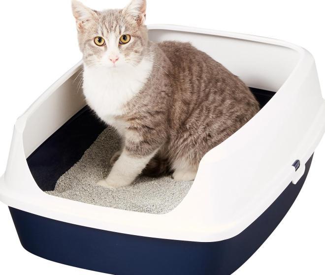 kedi tuvalet kabı temizliği neden önemli