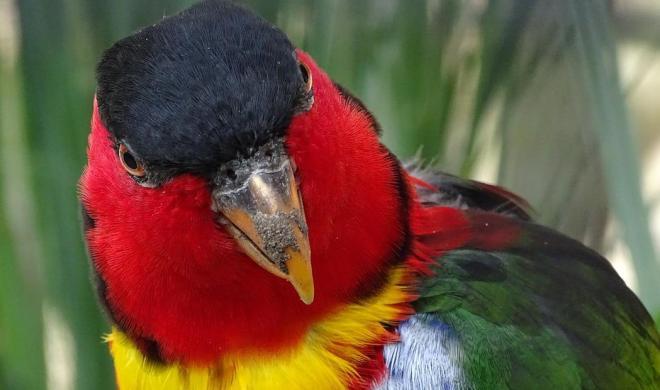 papağan türleri ve yaşam alanları