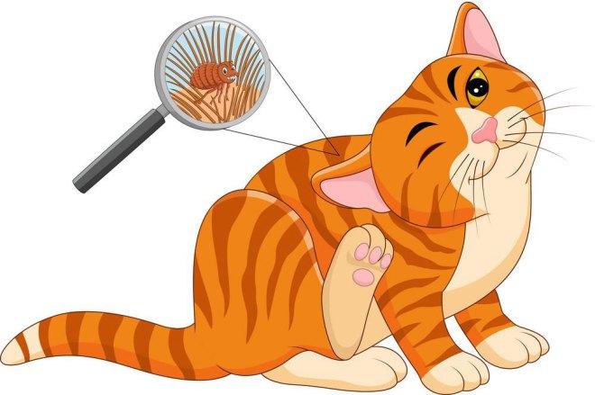 kedi pire damlası nasıl kullanılmalı