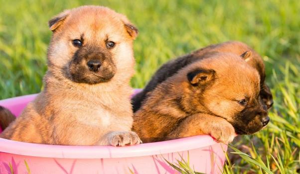 dişi köpek isimleri