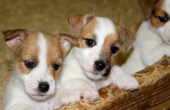 erkek köpek isimleri