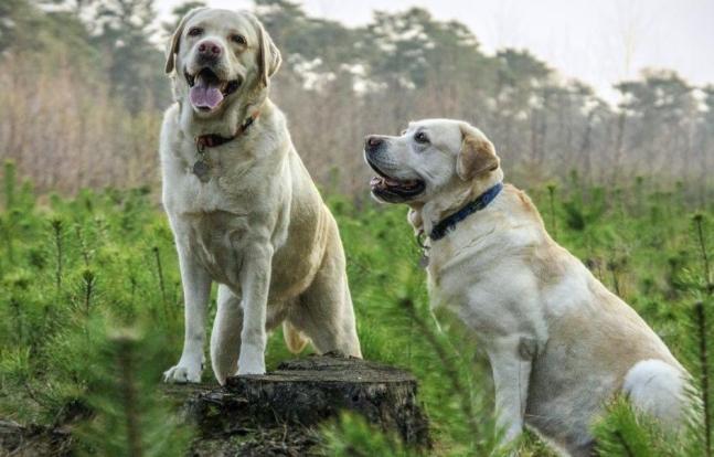 köpeklerin genel özellikleri-2